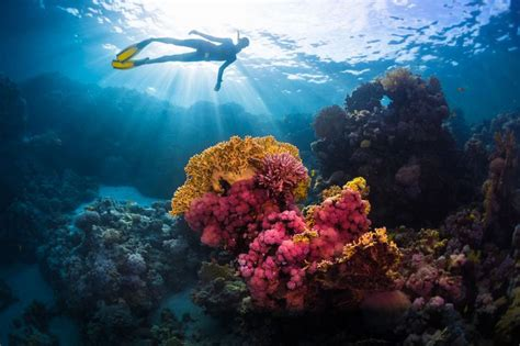 coral hawaii sunscreen reefs oxybenzone unbleached does why ban mikhail dudarev istockphoto alive getty