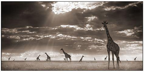 awesome animal photography jeremypersoncom