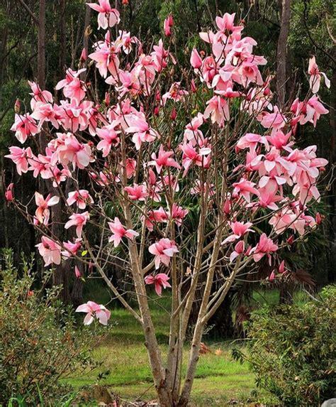 best small flowering trees flowering trees for small gardens small ornamental trees for small gardens uk home