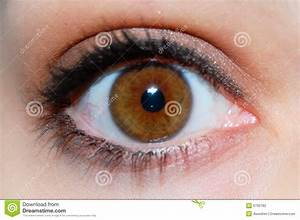 Brown Eye Stock Photography - Image: 6793182