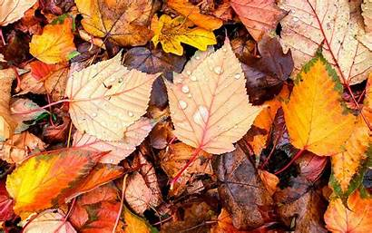 Leaves Autumn Wallpapers Brilliant Android Screen