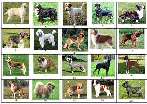dog breed  picture quiz  lharpo