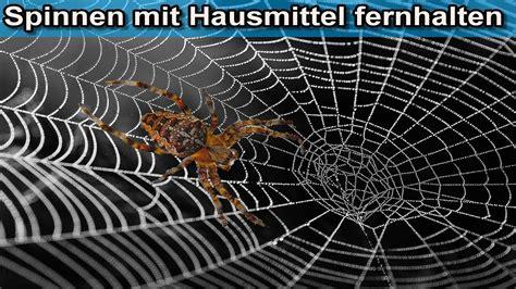 Spinnen Vertreiben Hausmittel by Spinnen Mit Hausmittel Vertreiben Spinne Aus Dem Keller