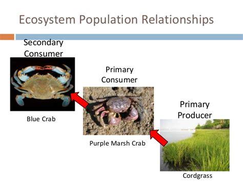 draft presentation final crab ecosystem consumer primary secondary