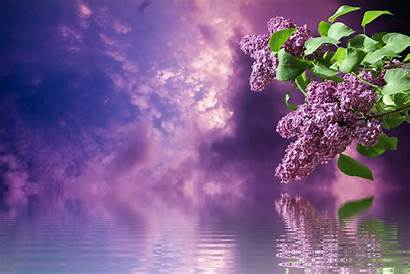 Lilac Spring Purple Nature Garden Branches Pixel