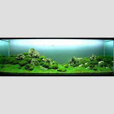 Aquascaping Styles Aquascapers