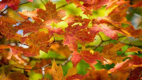 Rusty Autumn leaves - Wonderful season nature
