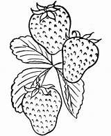 Coloring Strawberry Fruit Tasty Fruits Vegetable Colhidos Horta Morangos Drawing Strawberries Vegetables Adult Shopkins Season Tudodesenhos Kidsplaycolor Imprimir Colorir Desenho sketch template