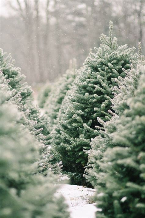 christmas tree farm in chicagoland area best 25 background ideas on wallpaper iphone wallpaper