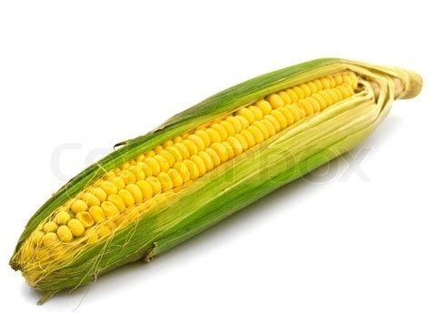 photo  ear corn   white background stock photo