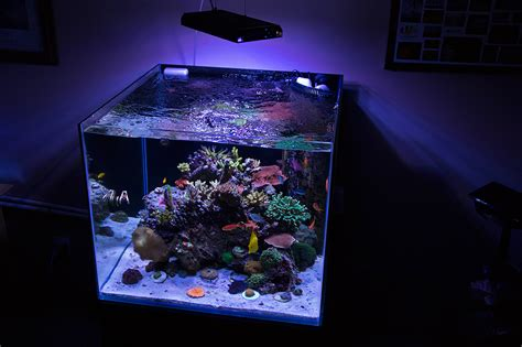 online cube marineland frameless cube aquariums reef central online