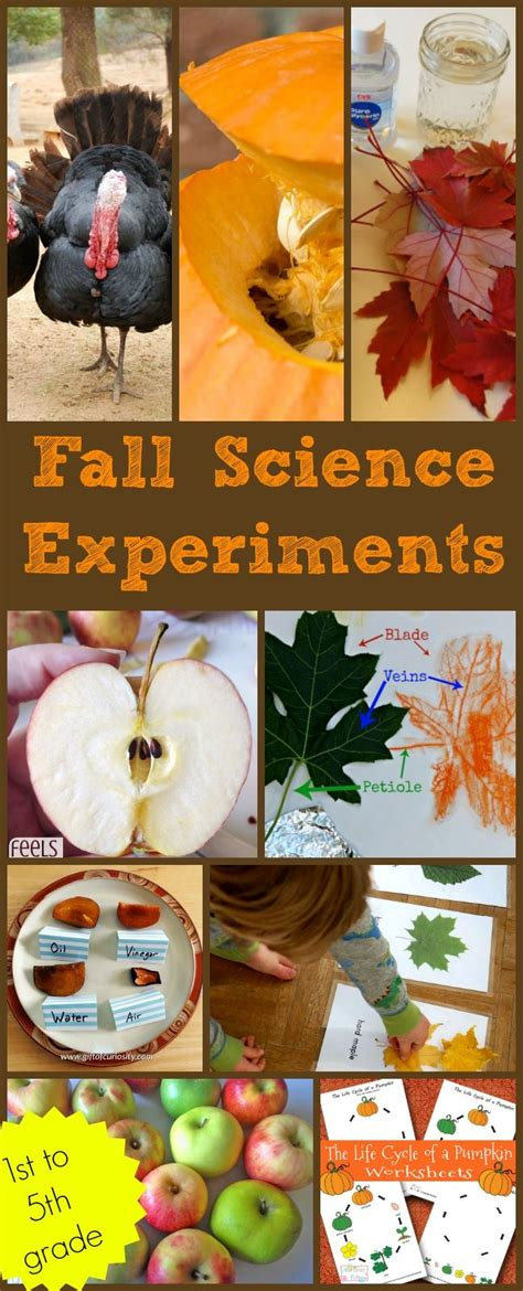 fall science experiments science experiments kids