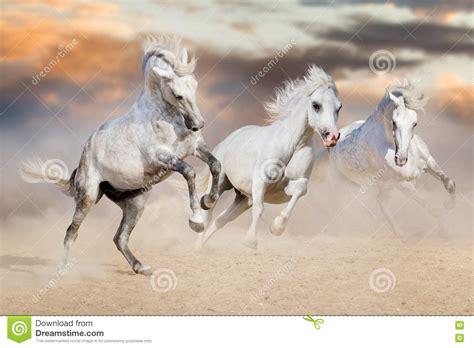 horses run mural prancing wild desert long preview