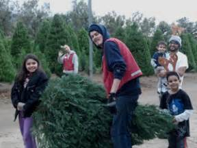 cut down your own christmas tree edmonton best places to cut your own tree in la cbs los angeles