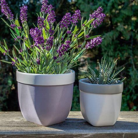 vasi di lavanda fiori da balcone le specie pi 249 ed adatte ad essere