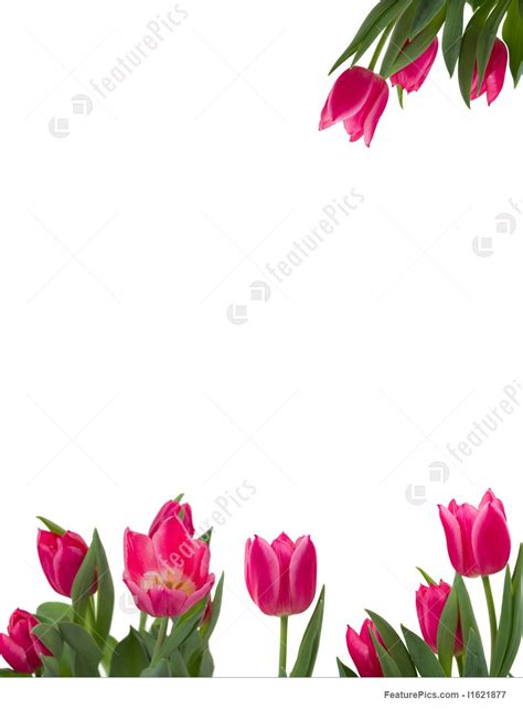 floral frame stock picture   featurepics