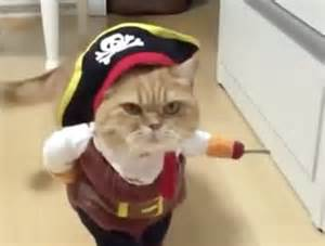 pirate costume for cats of the jungle pirate cat costumes