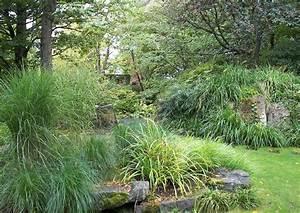 graser ziergraser im schatten steingartenpflanzen im garten With französischer balkon mit garten ziergräser
