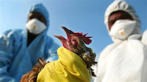 bird flu in chaharmahal financial tribune