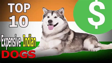 Top 10 Most Expensive Dog Breeds in India Top 10 animals