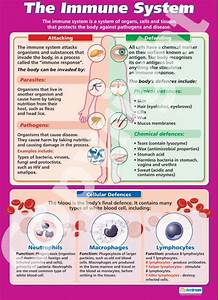 The Immune System Poster