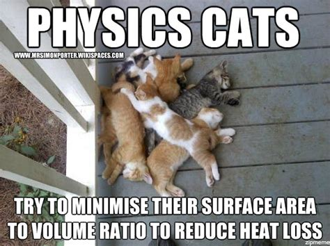 Science Cat Meme - science cat www imgkid com the image kid has it