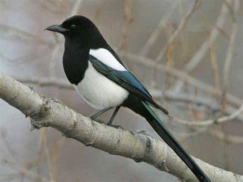foothills life zones birds