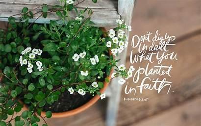 Faith Desktop June Seeds Thorn Sparrow Plant