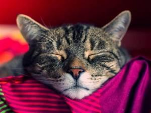 Welche Pflanzen Sind Nicht Giftig Für Katzen : welche katzenrassen f r anf nger geeignet sind ~ Eleganceandgraceweddings.com Haus und Dekorationen