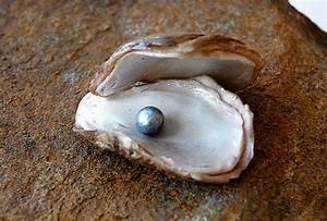 pearl in an oyster shell | sea shells | Pinterest | Colors ...