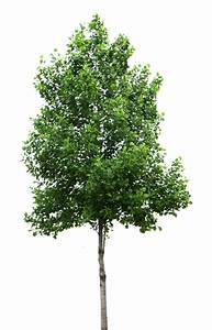 Download Tree Picture HQ PNG Image FreePNGImg