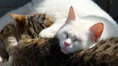 Cats Cuddling Wallpapers Animals Cat Funny Sleeping