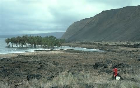 Hilo Hawaii Tsunami