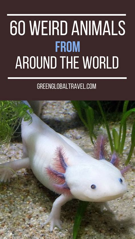 60 Weird Animals Around the World
