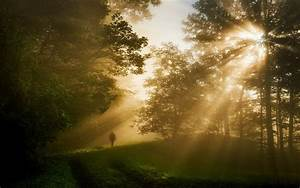 Nature, Landscape, Sun, Rays, Forest, Sunrise, Trees, Grass, Morning, Wallpapers, Hd, Desktop, And