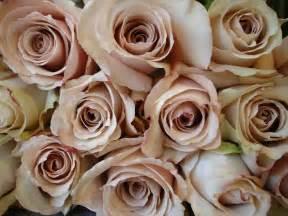 plum colored bridesmaid dresses roses dusty blush color flower varieties roses