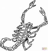 Scorpion Coloring Pages Printable Scorpions Animals Preschool Drawing Cartoon Desert Animal Supercoloring Getcoloringpages Giant Worksheets Getdrawings Crafts Silhouettes sketch template