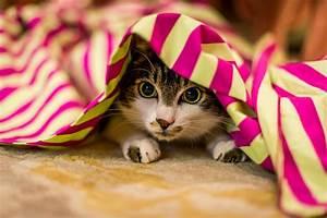 Jouets Pour Chats D Appartement : le chat d 39 appartement et le jeu comment le stimuler et ~ Melissatoandfro.com Idées de Décoration