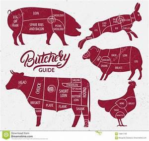 Animal Farm Set  Stock Vector  Illustration Of Chicken