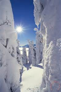 Snow-Covered Trees and Sun Image
