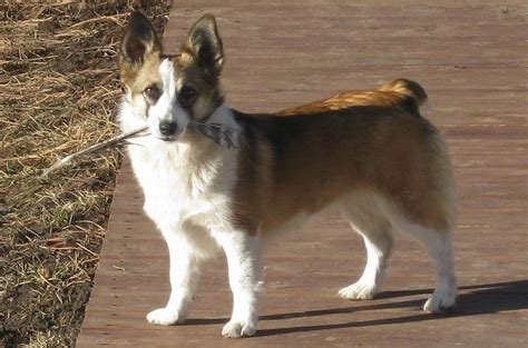 Augi - My Dog Breeders - Part 46