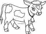 Cow Coloring Calf Pages Cartoon Printable Getcolorings sketch template
