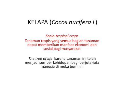 budidaya tanaman kelapa