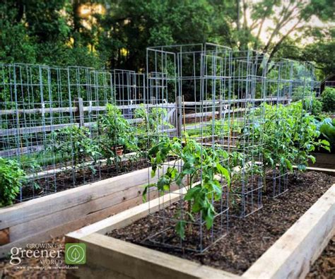 make the ultimate tomato cage growingagreenerworld com