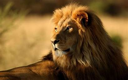 Africa Wallpapers Animals