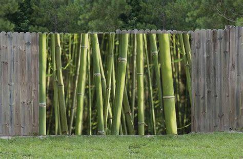 chambre deco vintage brise vue bambou brise vue haut pour jardin protégé du