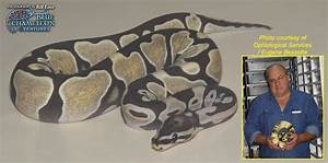 Scaleless royal - Reptile Forums