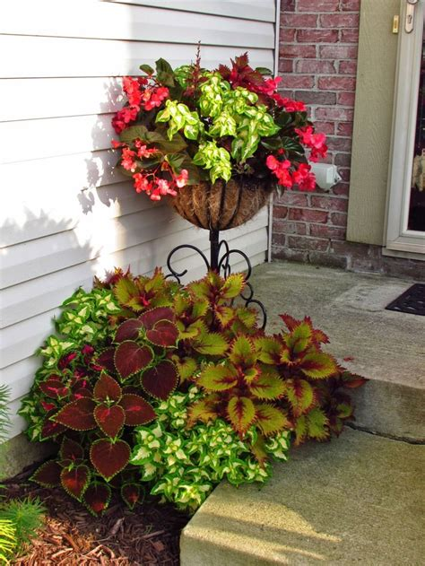 plants that come back every year 101 best quot perennials quot plants that come back every year images on pinterest