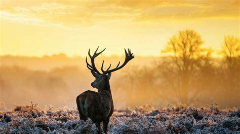 deer   wild animals qhd wallpaper wallpaper