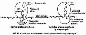 Streptomycin: Discovery, Structure and Mechanism | Antibiotics
